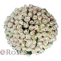 Талея 101 кремовая роза