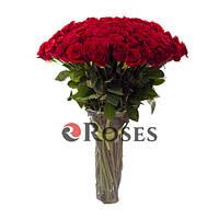Фридом 101 красная роза
