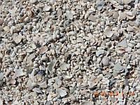 Ракушка кормовая (минеральная кормодобавка)