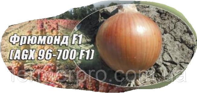 Семена лука Фрюмонд, 50 000 семян Agri Saaten