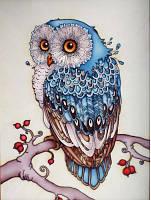 Сова Голубая (полная выкладка)