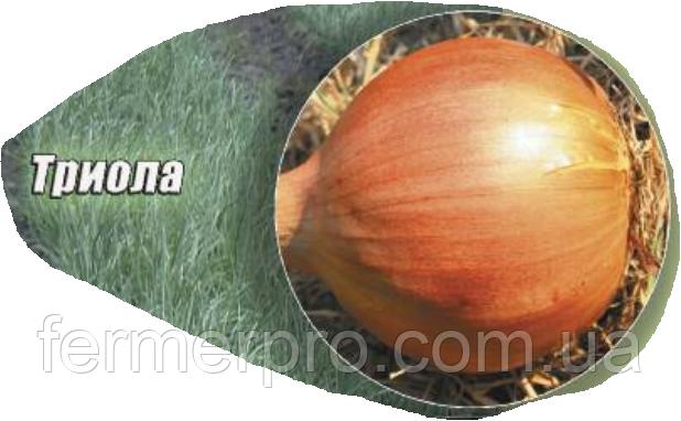 Семена лука Триола (Triola), 250 000 семян Agri Saaten