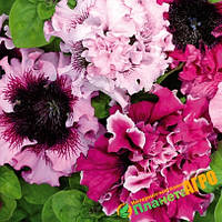 "Семена цветов петунии ""Черниго-Триумф F1"", фиолетово-белая, 50 гранул, ""Бадваси"", Украина"