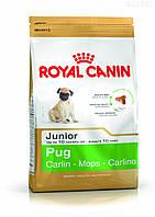 Royal Canin PUG JUNIOR 0,5 кг, корм для щенков мопса до 10 месяцев , фото 1