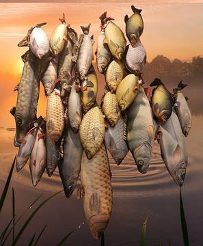 Прикольные мягкие рыбы-игрушки-подушки снова плывут к Вам в руки!
