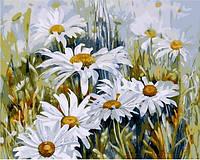 Картины по номерам 40×50 см. Ромашковое поле
