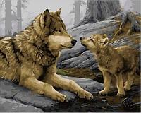 Картины по номерам 40×50 см. Волчонок Художник Даниель Смит
