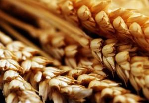 Аграрії стали продавати більше зерна