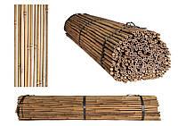 Бамбуковая опора, ствол диам.12-14мм, L 1,5м, фото 1