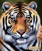 Набор папертоль Тигр