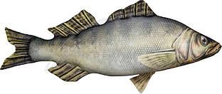 """Подушка 3KBaits рыба """"Судак"""" 115*54см"""