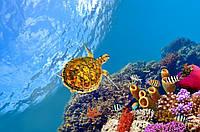 Панно Черепаха  - фотопечать кафель, плитка 20х30см.