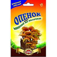 Опенок зимний мицелий грибов Futar 20 шт