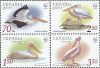 WWF, Розовый пеликан