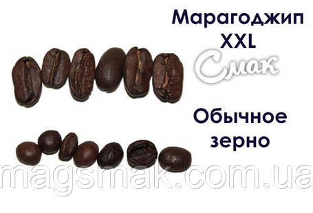 Кофе в зёрнах Марагоджип XXL, на вес, фото 2