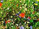 Декоративная цветочная смесь 50г, фото 2