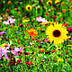 Декоративная цветочная смесь 50г, фото 3
