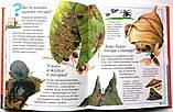 Нова дитяча енциклопедія , фото 3