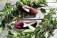Стильные женские замшевые балетки, классика, материал сверху и внутри натуральная кожа, цвет бордо 39