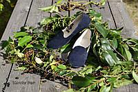 Стильные женские замшевые балетки лоферы, классика, материал натуральная замша, цвет синий 37