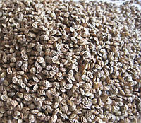 Семена эспарцета медоносного, кг