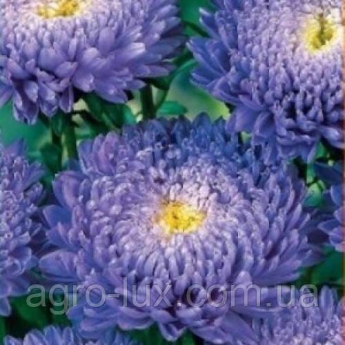 Семена астры Арлекин голубая 2 г