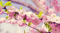 Рекомендации на весну