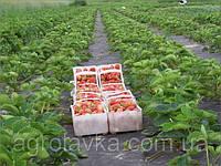 Главные преимущества агроволокна