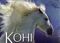 Коні.Походження та характеристики 100 порід коней