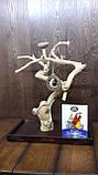 Присада стенд для птахів (Java Stand Ява) 80см., фото 2
