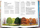 Енциклопедія запитань і відповідей. 1000 відповідей на 1000 запитань, фото 5