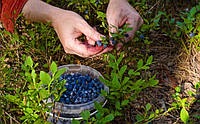 MultiChem. Консервант плодів ConFruit, 1 л. Консервант плодов, антитранспирант фруктов и ягод.