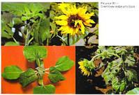Листовая подкормка Монохелат БОР В-120 для Подсолнечника, Рапса, Сои, Гречихи, Овощных