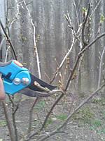 Уход за садом Киев Киевская область Уход за дачным участком Услуги садовника, фото 1