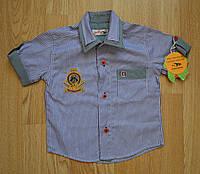 Рубашка в полоску для мальчика с коротким рукавом Musti (Турция)