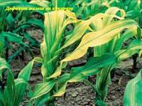 Удобрение от Хлороза, МоноХелат ЖЕЛЕЗО Fe-100, гумати, ПАР.