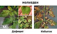 Жидкое удобрение МоноХелат МОЛИБДЕН Мо-40 для бобовых, сои, капусты, овощных культур