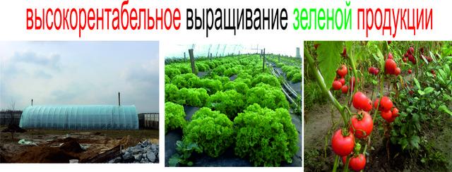 высокорентабельное выращивание зеленой продукции