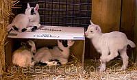 Мини овцы, карликовые антилопы, карликовые коровы, лани др