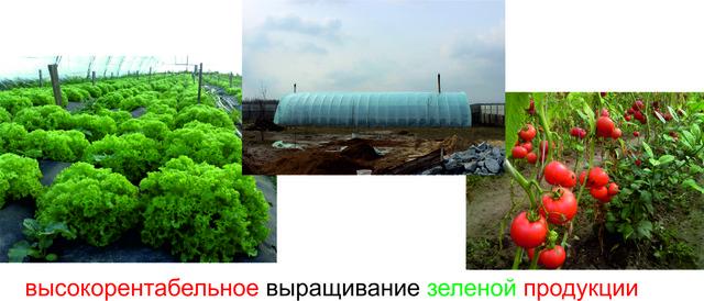 """выращивание зеленой продукции в теплице """"Фермер"""""""