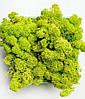 Сочный зелёный. Скандинавский Мох Ягегль Стабилизированный 0,500 kg