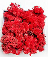 Красный. Скандинавский Мох Ягегль Стабилизированный 0,500 kg