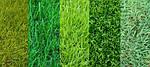 Виды газонной травы (интересные статьи)