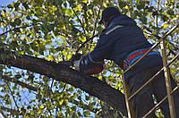 Спил опасных деревьев в труднодоступных местах.
