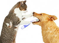 Гигиена домашних животных