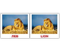 """Карточки мини русско-английские """"Дикие животные/Wild"""" 40 карт., в кул 8*10см, ТМ Вундеркинд с пел(096761)"""