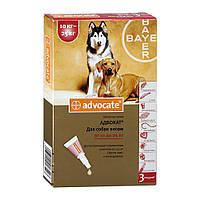 Адвокат капли для собак весом 10-25кг ( 1пипетка )