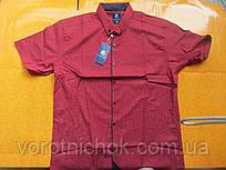 Мужская рубашка Grand Men - короткий рукав
