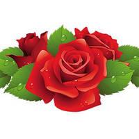 Саженцы декоративных растений и рассада цветов
