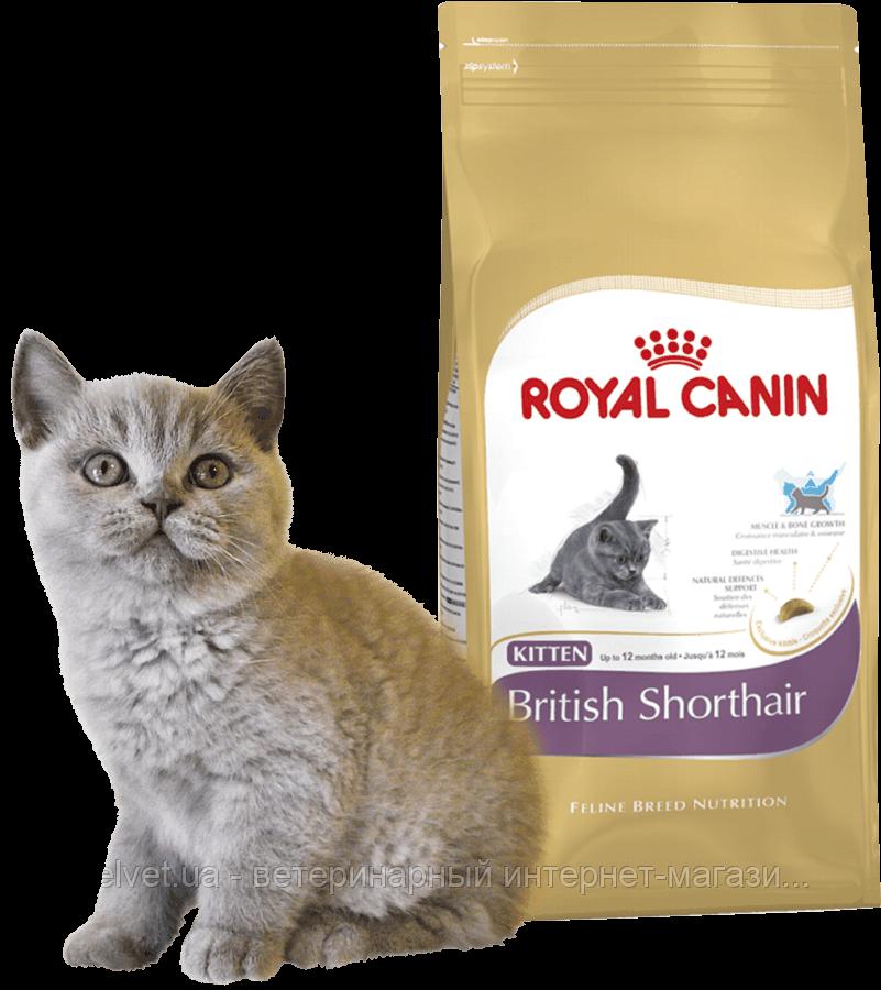 Royal Canin Kitten British Shorthair для котят британской короткошерстной (2 кг и 10 кг)